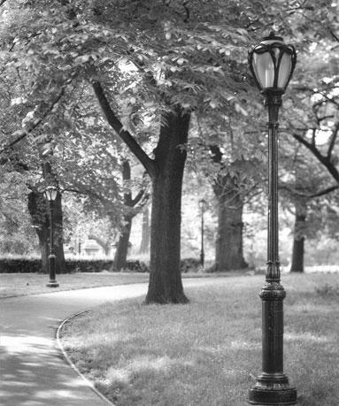 New York City's Central Park Lights and Yale University Lights